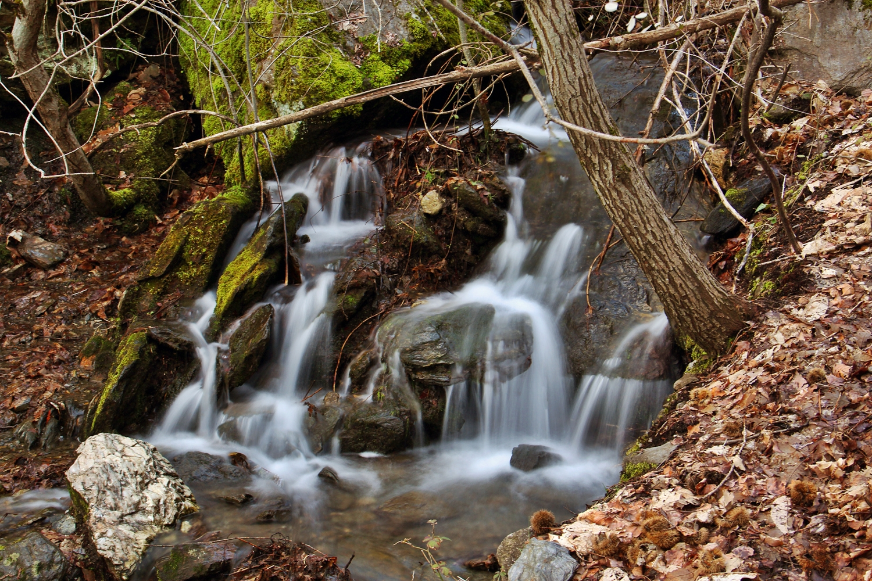 """Spring Water"" - PN Sierra de Nevada, Granada - WF06447"