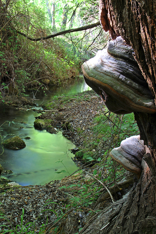"""Green River"" - PN Sierra de Huétor, Granada - R07985"
