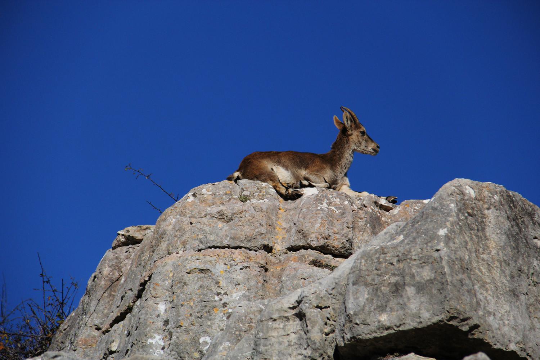 """Mountain Goat Statue"" - PN Torcal, Malaga - WL00037"