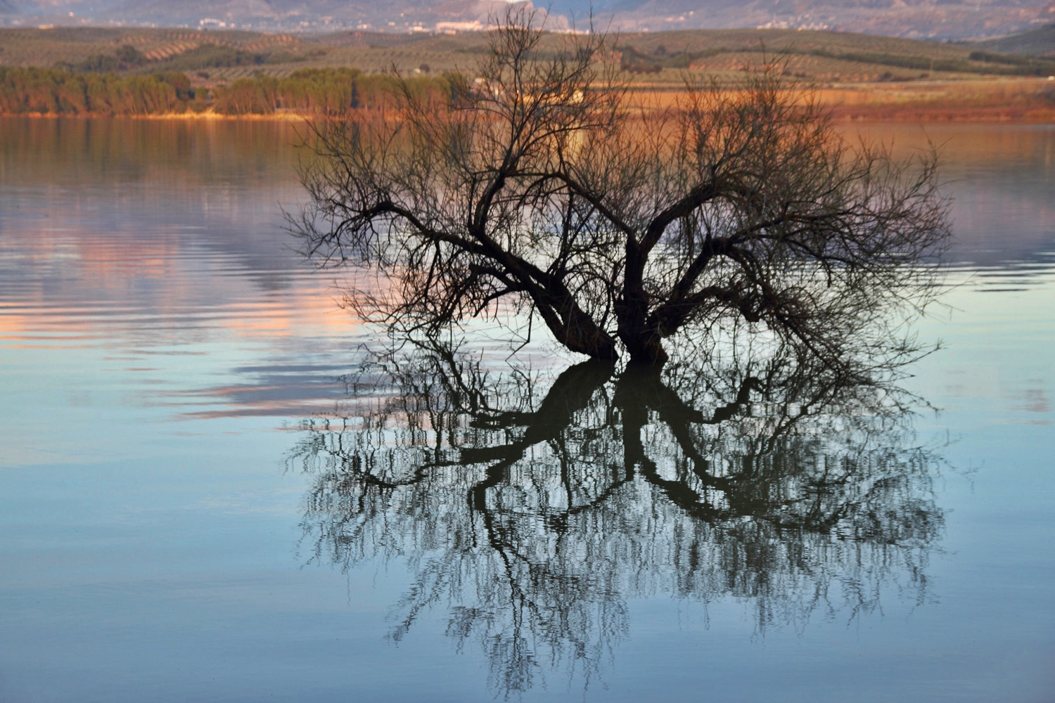 """The Water Tree"" - Pantano de Cubillas, Granada - L07718"