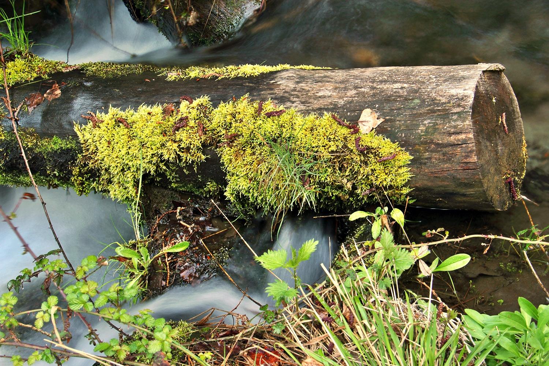 """Green Water Trunk"" - Marquesado de Zenete, PN Sierra Nevada, Granada - WC06946"