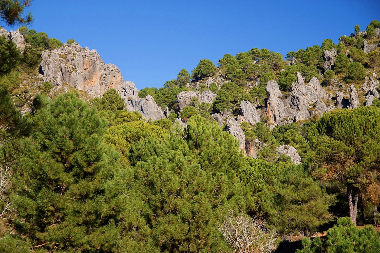 """""""Rock Woods"""" - PN Sierra de Huétor LS06964"""