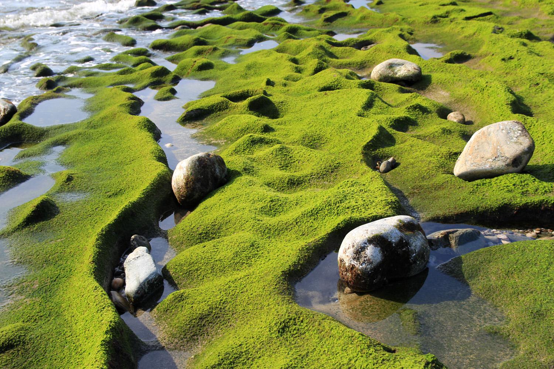"""Green Waves"" - Playa La Chucha, Motril - DR01377"