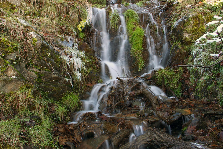 PN Sierra de Nevada, Granada - WF06566