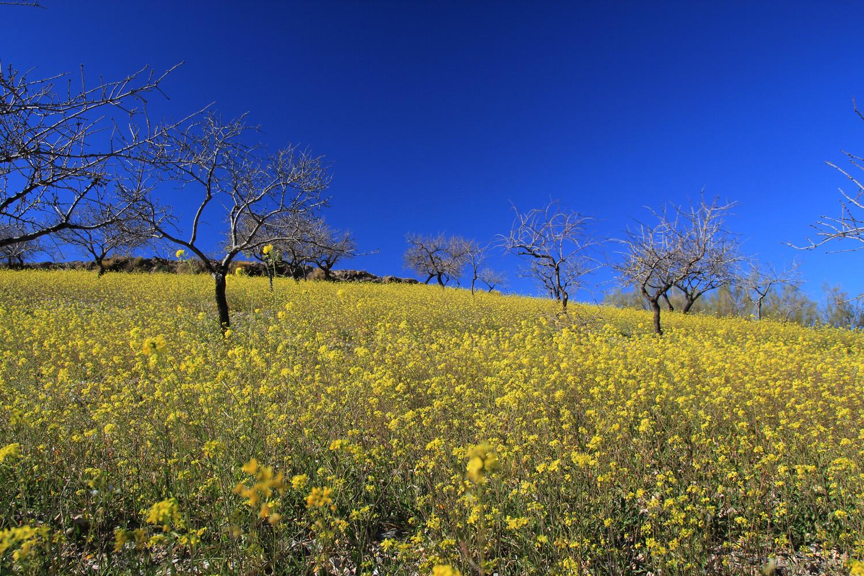 """Flowerfields Turon"" - Alpujarra, Granada - LS00874"