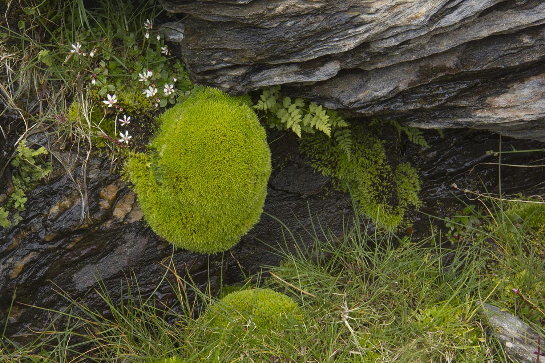 """The Green Ball"" - PN Sierra Nevada, Granada - FF05152"