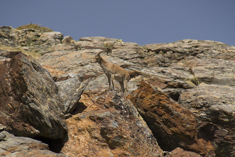"""Hidden"" PN Sierra Nevada, Granada - WL04374"