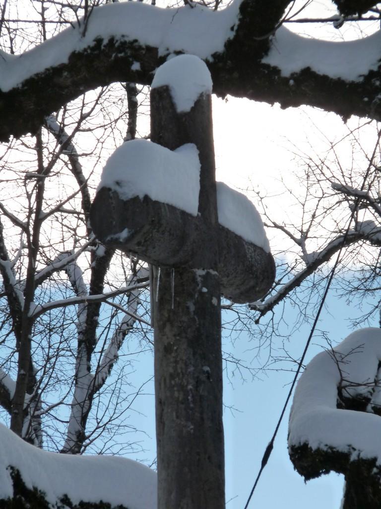 Croix de Servoin aux côtés du Tilleul de 1601 (Cormaranche)