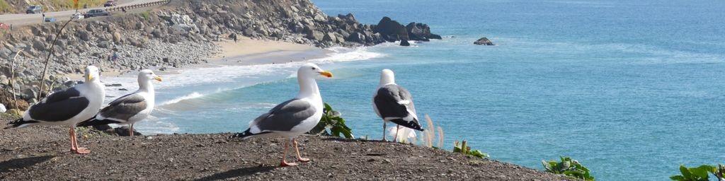 Keine Küste ohne Unmengen frecher Seevögel