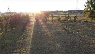 庭木伐採・草刈り