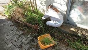 庭木剪定・草取り