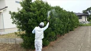 庭木消毒・蜂の巣退治