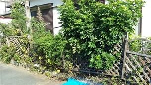 庭木伐採・草取り
