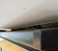 スズメの巣対策②