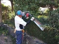 生垣刈り込み