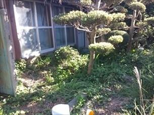 庭木剪定伐採・草刈り草取り