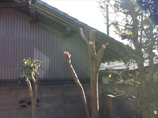 庭木剪定・伐採
