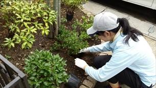 庭木植栽・剪定