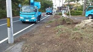 松の木伐採