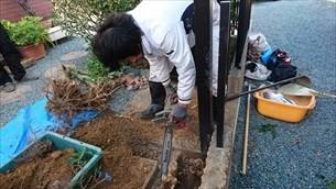 庭木伐採・抜根