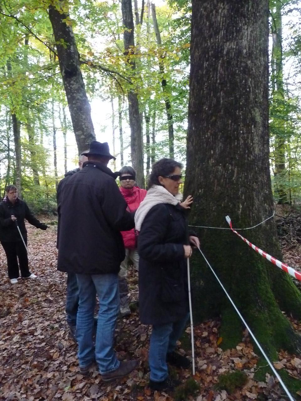 Partage d'expérience en forêt