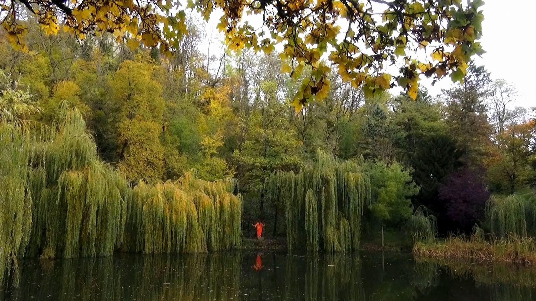 Fontaine-lès-Dijon_La Mare_drachin_photo zed terra 11/11/2014