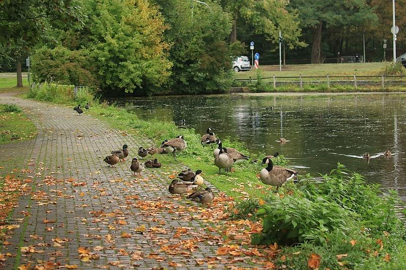 Der bevorzugte Rastplatz der Wasservögel am Gehweg.