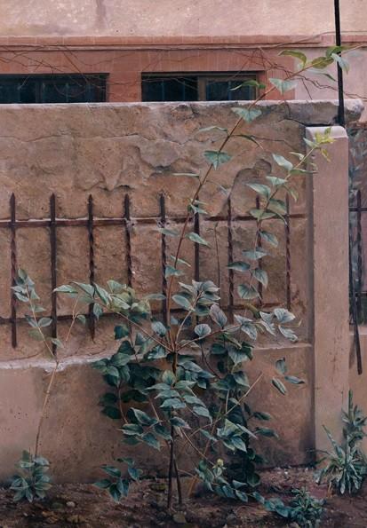 """Isabel Quintanilla,Tapia del estudio de Urola 1977.La celinda según Isabel crece y trepa por la valla, """"lo vivo encadenado a lo inerte""""El metal se hunde en el cemento, algo casi doloroso, mro construido a los ojos que espian."""