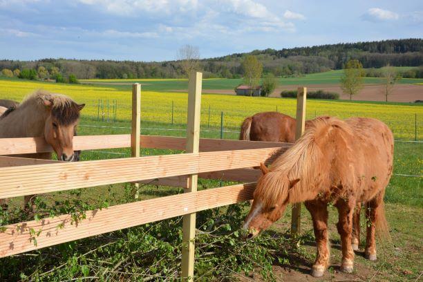 Pferde, Totholzhecke, Knabberholz
