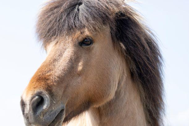 naturnahe Pferdehaltung, Elsbeere, Pflanzenvielfalt, Sträucher, artgerechte Pferdehaltung