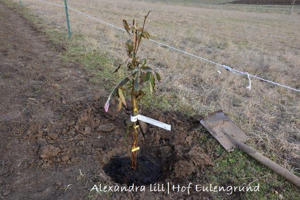 Artenvielfalt auf Hof Eulengrund