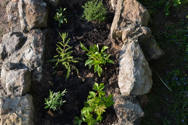 Naturgarten, Wildnis, Artenvielfalt