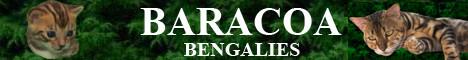 baracoa_bengal