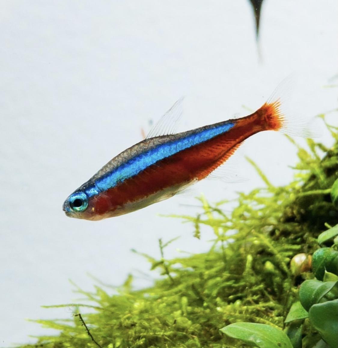 【水槽レンタルの相場】熱帯魚水槽をレンタルする前に適正価格を知ろう