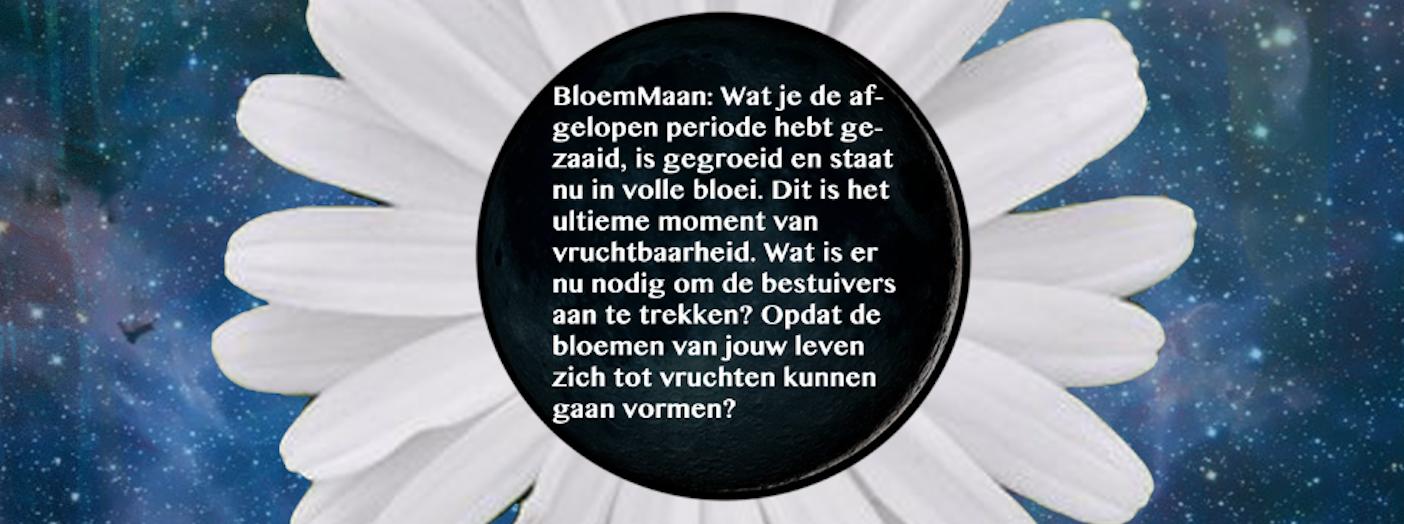 BloemMaan & de Dans van de Vlindervrouw