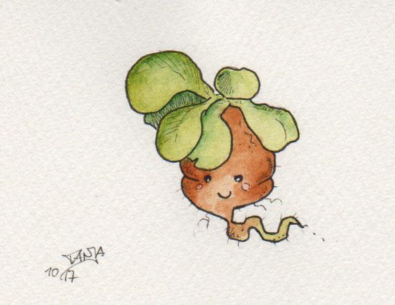 Zeichnung zum Thema Feldsalat für die 365-Tage-Doodle-Challenge mit Aquarellfarben.