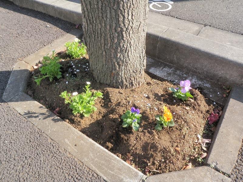 植栽後の街路樹桝2