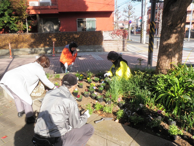 湘南台中学校下の三角緑地帯での植え込み作業