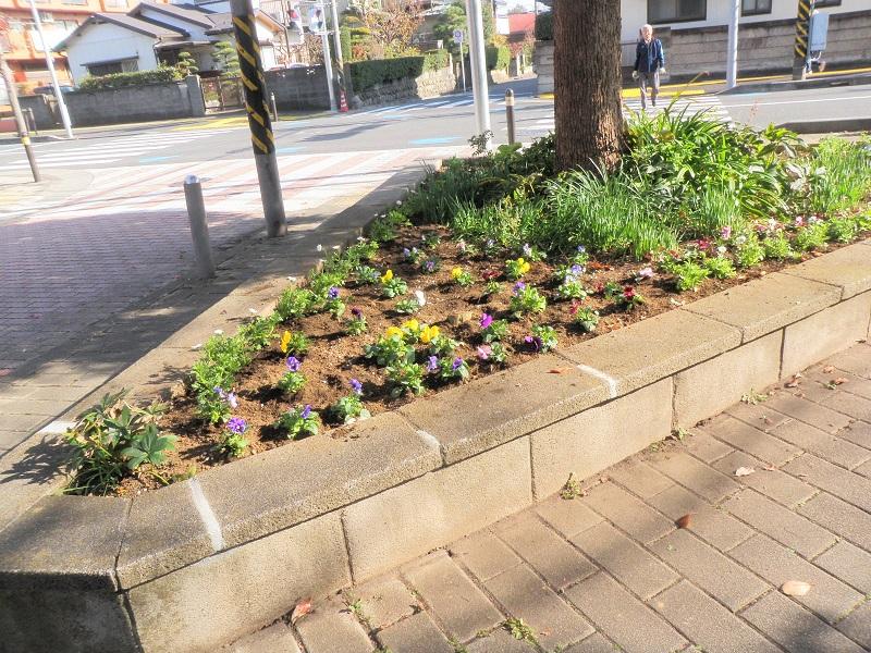 三角緑地帯にきれいに植えられた花々