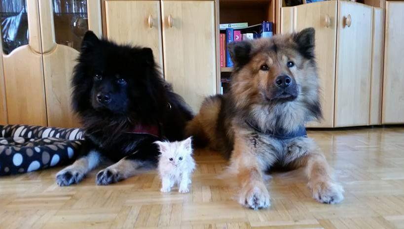Gremmlin mit seinen zwei Bodyguards