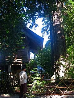 樹齢1300年の大杉の前では男性が瞑想を。