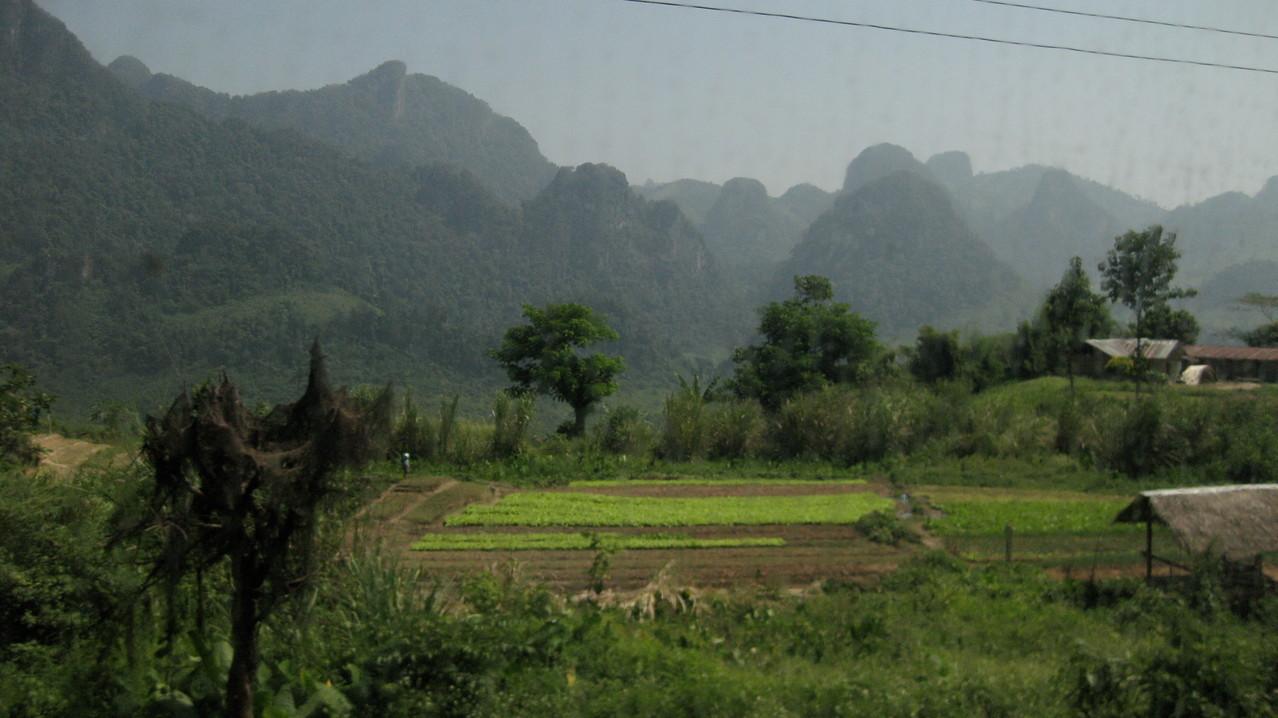 山ばかりで、このような平らな地での畑を見るのはめずらしい。