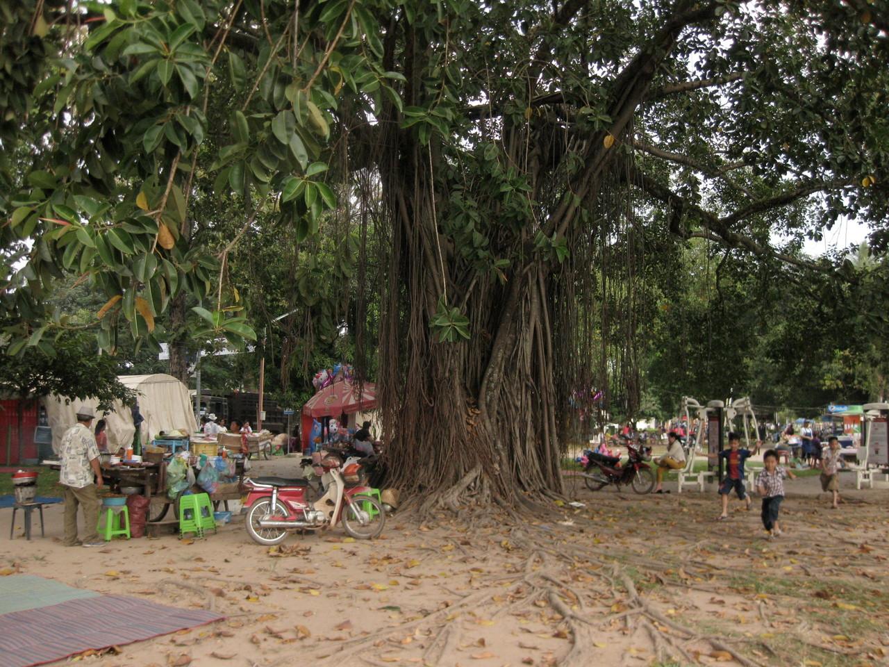 アヌヴォン王公園にある大樹。