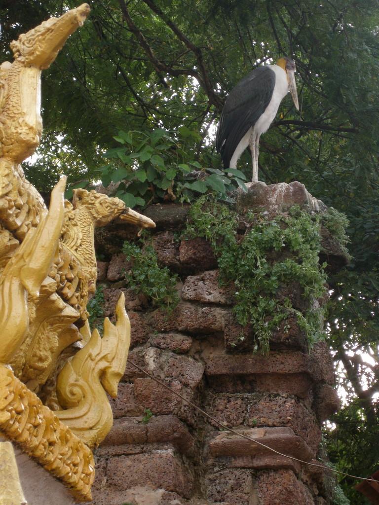 ここの古い仏塔跡に、佐賀にもいるアオサギ(だと思う)がいてちょっと興奮した。はじめはその辺にたくさんあるわけわからん像の一つだと気も止めなかったのだが、突然大きな羽をバサーと広げたのでびっくりした。その後また佐賀のアオサギと同じようにじーと動かずまた像になってしまった。