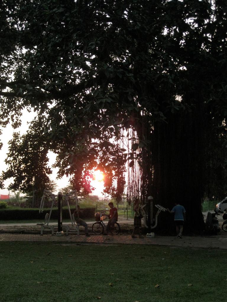 大樹の下には運動器具が置いてある。ジョギングしている人もけっこういた。