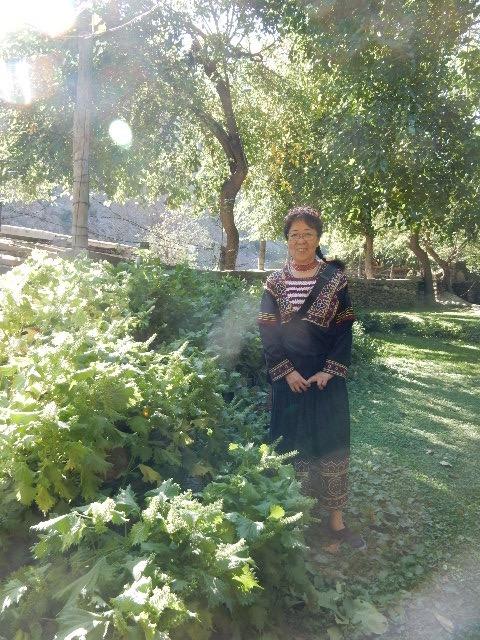 十年以上前に家の脇に植えたシソが、土砂崩れで下の庭に土が移動し、シソはそこが気に入ったのかエラく繁殖してこの通り。