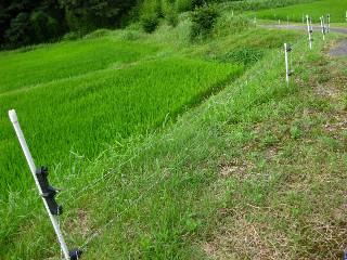 近年は農産物の猪被害が多く、猪よけのために張られた電動線。
