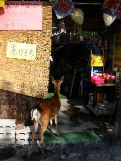 何かおねだりしているの?店をのぞく鹿ちゃん。店の中まで入らないでおりこうだね。
