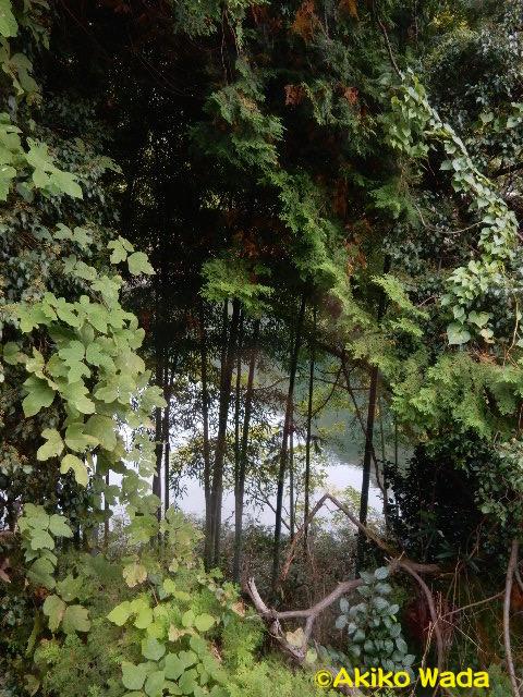 崖や川縁を木々の枝を分け入るようにして走る。