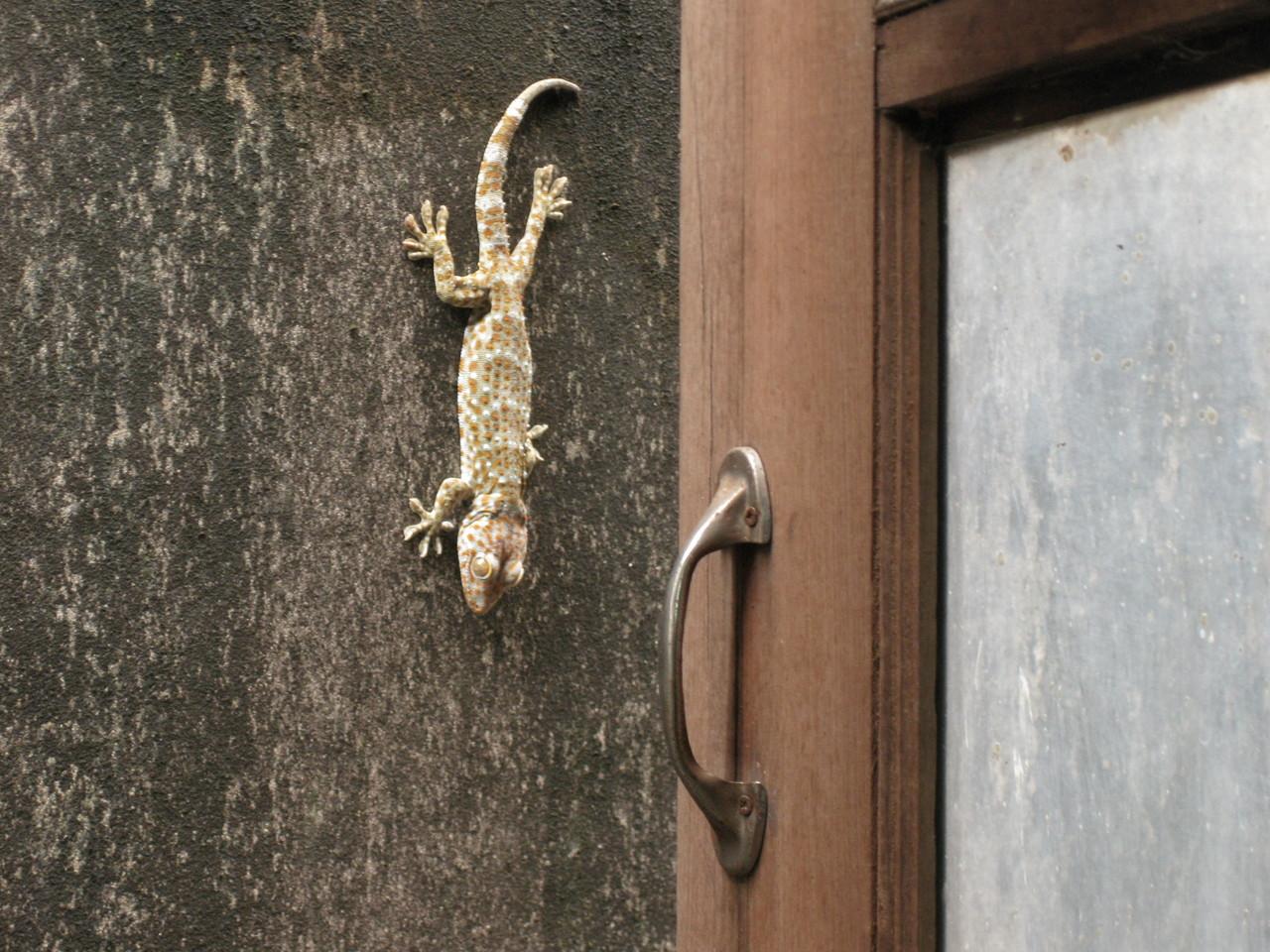 宿の窓の向こうの壁にトカゲだろうか、ヤモリより大きい生き物がじっと睨んでおった。